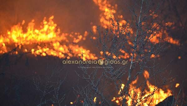 Άμεση η αντίδραση των πυροσβεστών της Αλεξάνδρειας – έσβησε η φωτιά στο Νησελι