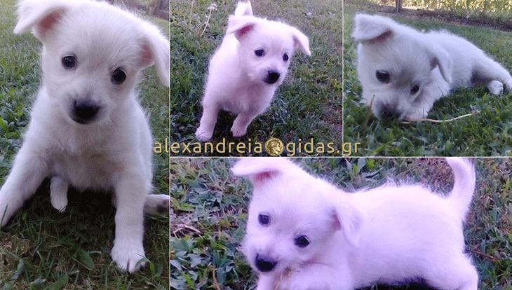 Χαρίζεται αυτό το όμορφο σκυλάκι στον δήμο Αλεξάνδρειας (φώτο)
