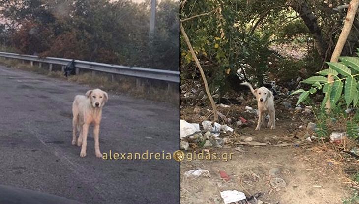 Ένας χτυπημένος σκύλος στον κόμβο Νησελίου προς Θεσσαλονίκη (φώτο)