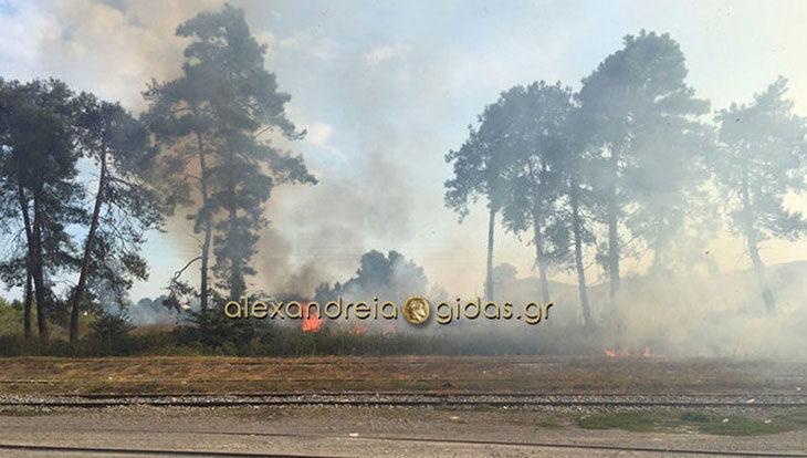 ΤΩΡΑ: Πυκνοί καπνοί στα όρια του δήμου Αλεξάνδρειας