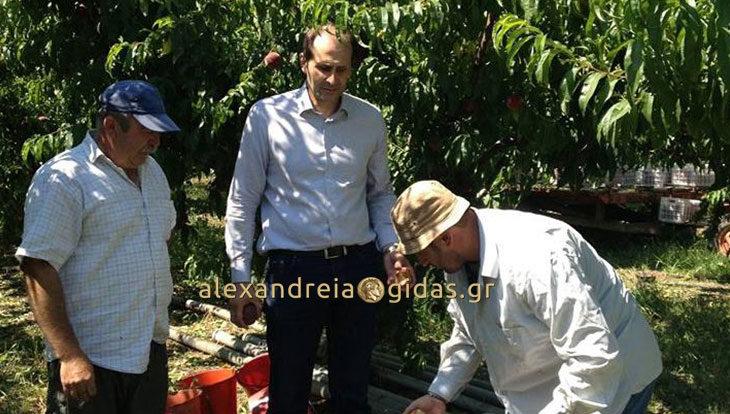 Απ. Βεσυρόπουλος: «Η κυβέρνηση ΣΥΡΙΖΑ-ΑΝΕΛ είναι έκθετη απέναντι στους αγρότες με το σκάνδαλο της ΠΑΣΕΓΕΣ»