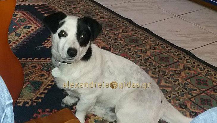 Χάθηκε σκύλος στο Πλατύ, δίνεται αμοιβή – βοηθήστε! (φώτο)