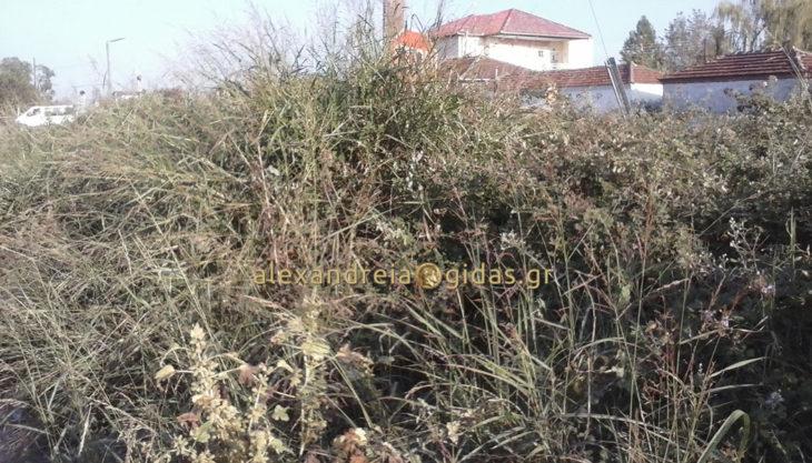 Εσείς μπορείτε να δείτε τι υπάρχει πίσω από τα χόρτα στην Καψόχωρα; (φώτο)