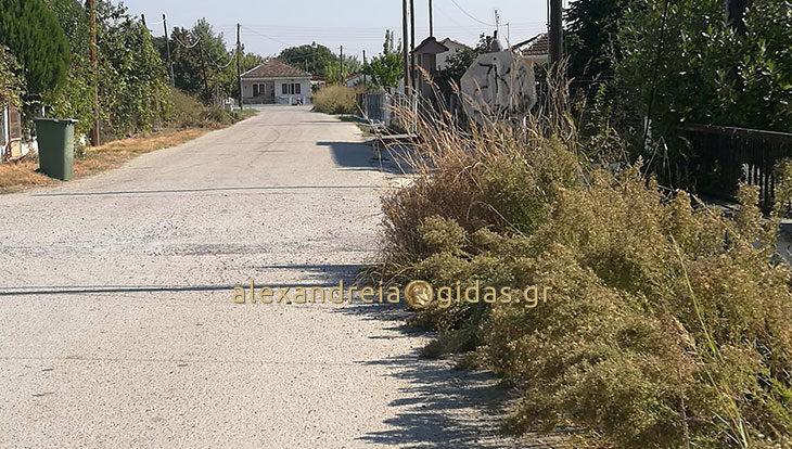 Αναγνώστης: Ταμπέλα μέσα σε χόρτα; Για δείτε τα χάλια στο Νησί Αλεξάνδρειας! (φώτο)