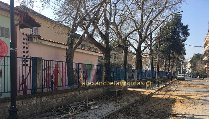 Κλάδεψαν τα δέντρα στις αυλές των 1ου-5ου Δημοτικών Σχολείων Αλεξάνδρειας (φώτο)