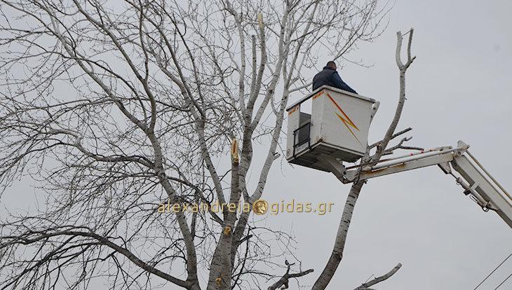Κλάδεψαν τα επικίνδυνα κλαδιά στα 1ο-5ο Δημοτικά Σχολεία Αλεξάνδρειας (φώτο)
