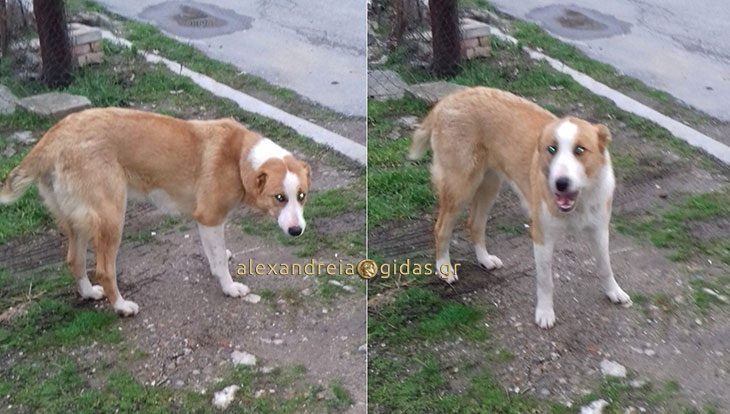 Αναγνώστης: Αρπαγή σκύλου στην Αλεξάνδρεια (φώτο)