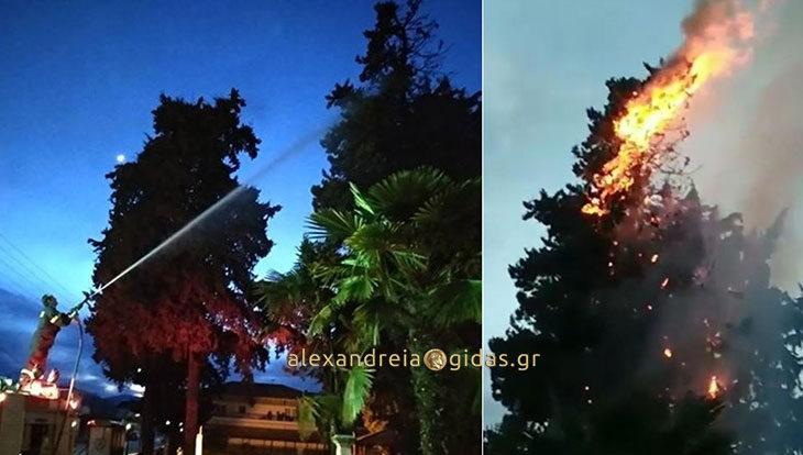 Πήρε φωτιά πεύκο στην πλατεία του Παλαιού Προδρόμου στον δήμο Αλεξάνδρειας (φωτογραφίες)