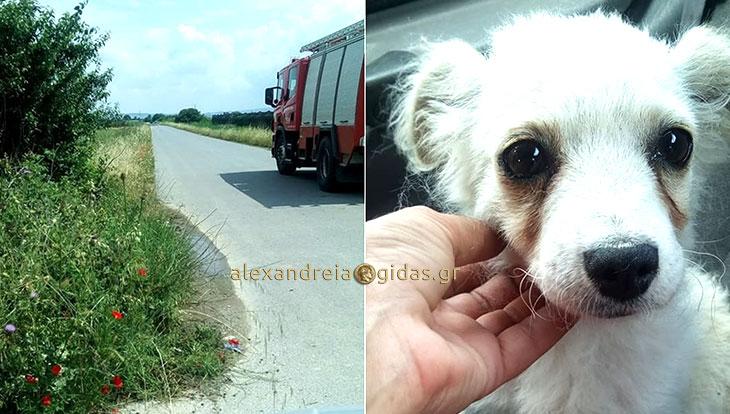 Πέταξαν κουτάβι σε κανάλι έξω από την Αλεξάνδρεια – με τη βοήθεια της πυροσβεστικής σώθηκε και υιοθετήθηκε! (φώτο)