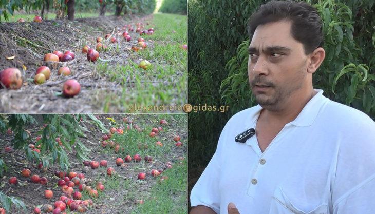 Καταστροφές σε αγροτικές καλλιέργειες στον δήμο Αλεξάνδρειας από ανεμοθύελλα και χαλάζι (φώτο-βίντεο)