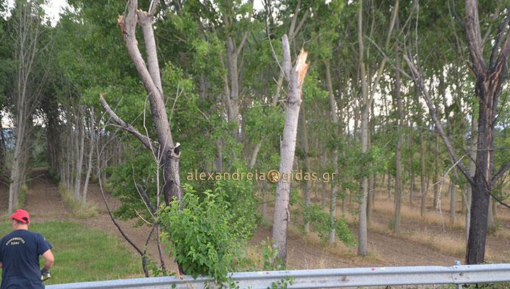 Δέντρο έπεσε στην Εγνατία Οδό κοντά στο σημείο που έχασε τη ζωή του ο 50χρονος από τη Βέροια (φώτο-βίντεο)