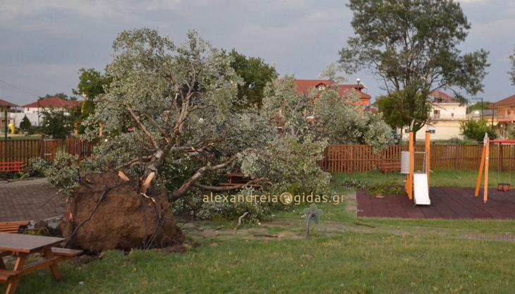 Κινδύνεψαν άνθρωποι στα Τρίκαλα Αλεξάνδρειας – αέρας ξήλωσε δέντρα και σκεπές (πρώτες εικόνες)