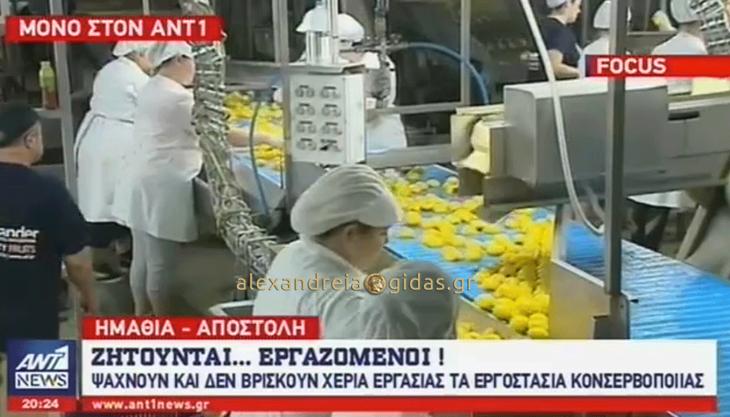 Στις ειδήσεις του ΑΝΤ1 τα εργοστάσια της Ημαθίας: Ψάχνουμε προσωπικό και οι νέοι είναι στις καφετέριες! (βίντεο)