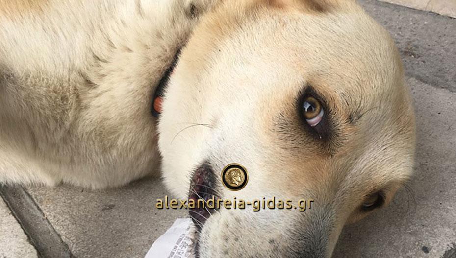 Βρέθηκε στην Αλεξάνδρεια: Αν την ψάχνετε, επικοινωνήστε! (φώτο)