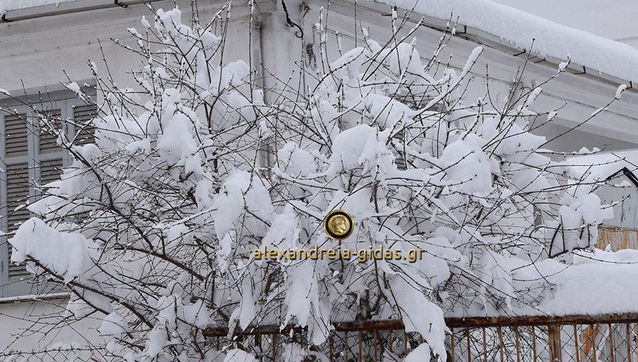 Κλειστά τα σχολεία στον δήμο Αλεξάνδρειας την Τετάρτη 9 Ιανουαρίου