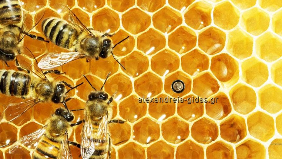 Eκλογοαπολογιστική συνέλευση του Μελισσοκομικού Συλλόγου Ημαθίας