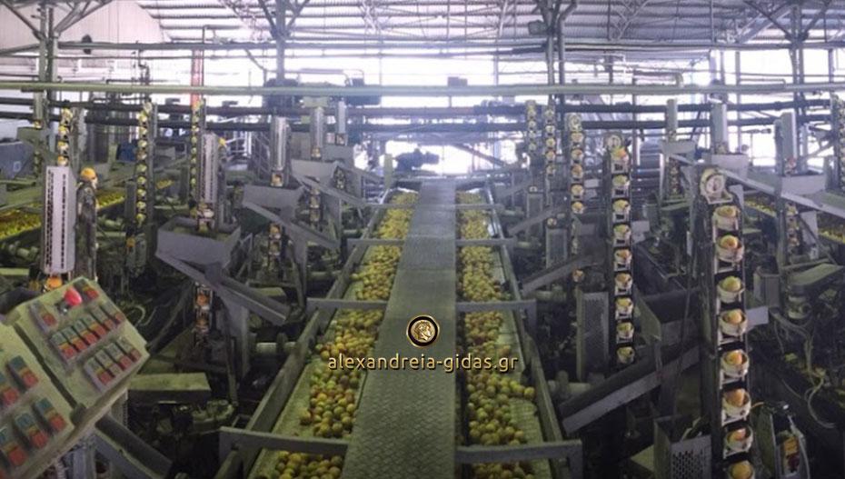 Προσωπικό ζητά το κονσερβοποιείο ΠΑΥΛΙΔΗΣ στα Γιαννιτσά – δωρεάν λεωφορείο από την Αλεξάνδρεια