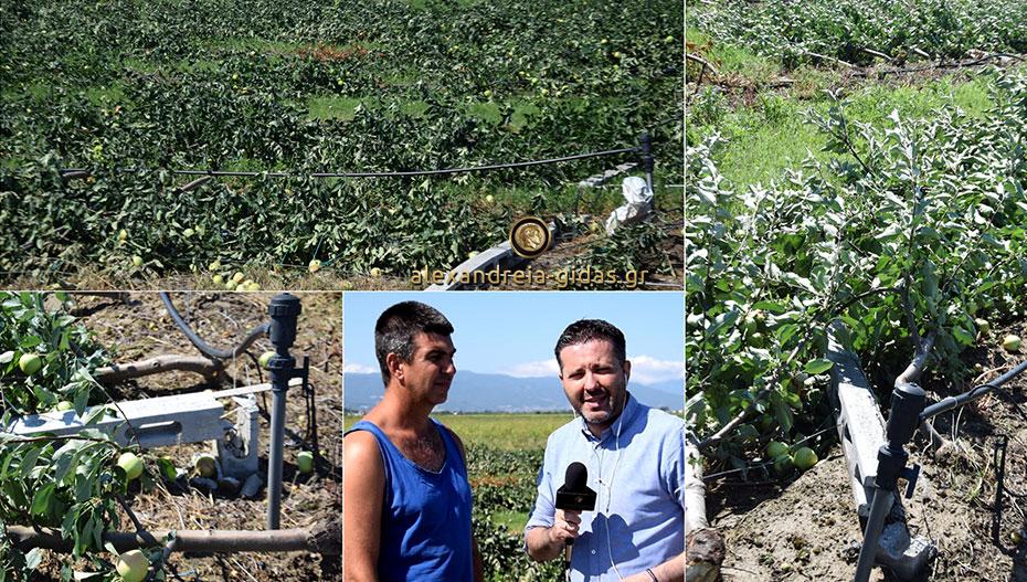 Κι όμως αυτό ήταν φάρμα με μήλα στην Αγκαθιά.. (εικόνες-βίντεο)