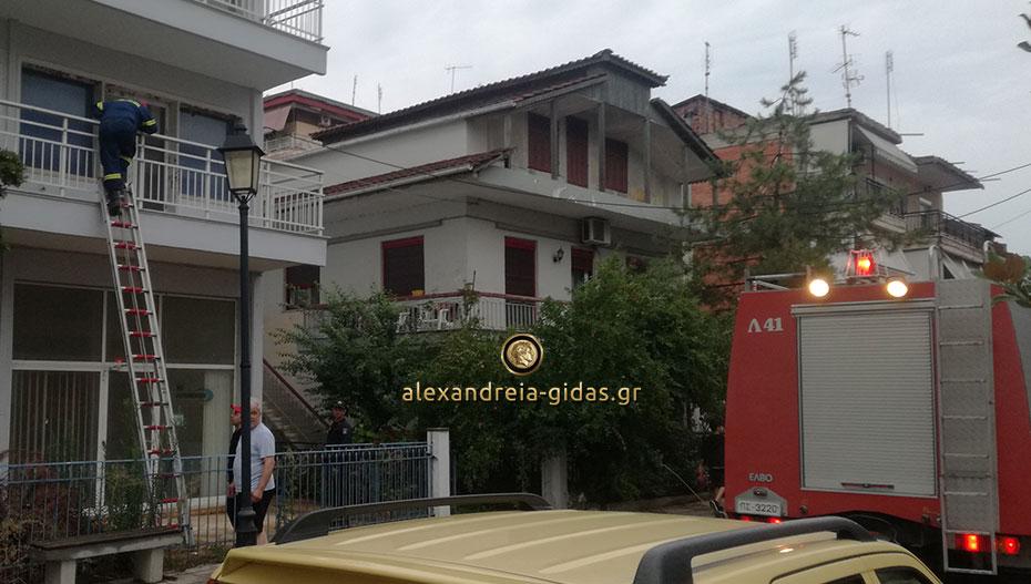 Αδέσποτο γάτο απεγκλώβισαν οι πυροσβέστες στην Αλεξάνδρεια (εικόνες)