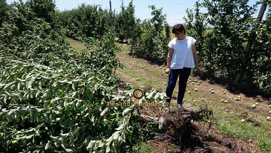 Βουλευτές του ΣΥΡΙΖΑ ρωτάνε τον Υπ. Αγρ. Ανάπτυξης για δύο σοβαρά ζητήματα των αγροτών