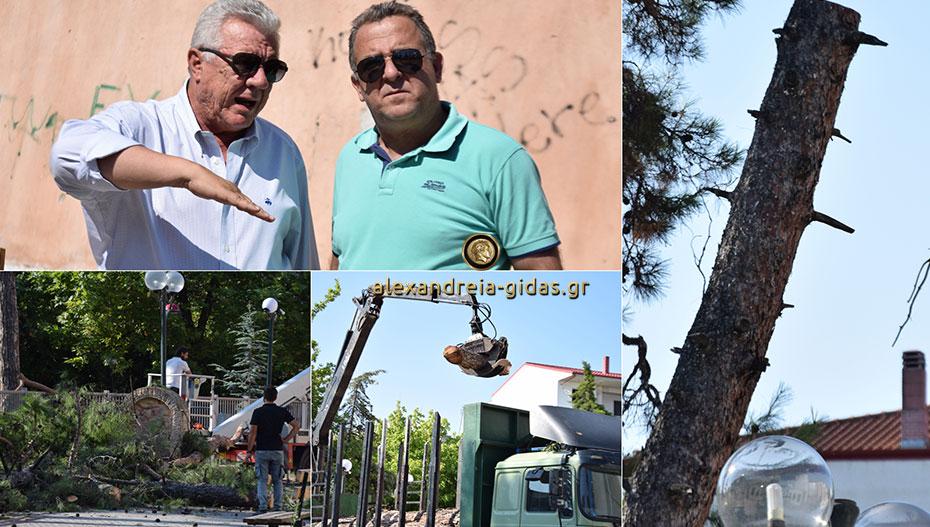 Οργασμός εργασιών το πρωί στην Αλεξάνδρεια – συνεχίζεται η κοπή και η απομάκρυνση των δέντρων (εικόνες)