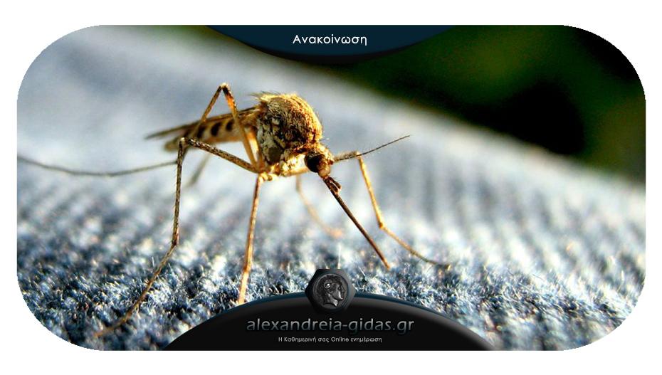 Δήμος Αλεξάνδρειας: Αυτά είναι τα μέτρα για να προφυλαχτούμε από τα κουνούπια