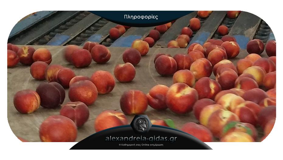 Η εταιρία συσκευασίας και εξαγωγής φρούτων «ΚxK FRUIT» στην Ημαθία ζητά προσωπικό