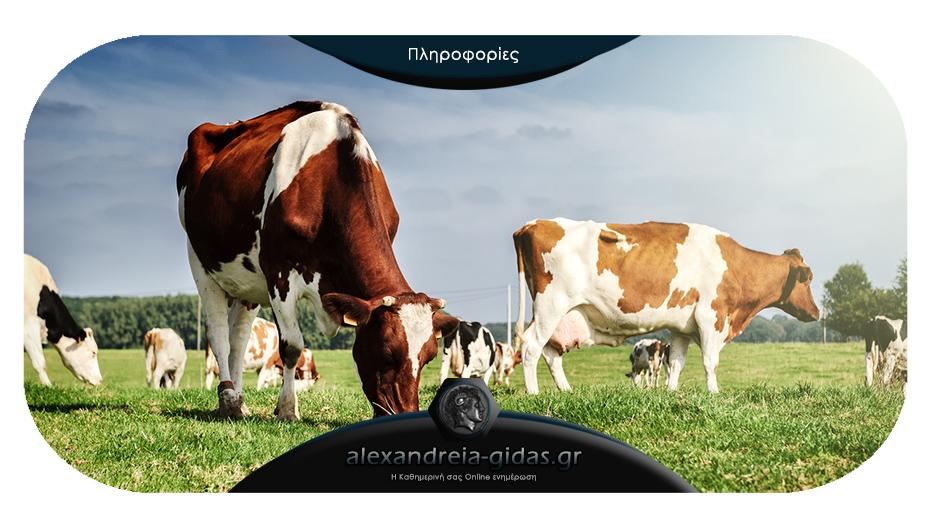 Σημαντική ενημέρωση για τους κτηνοτρόφους της Ημαθίας από την αντιπεριφέρεια