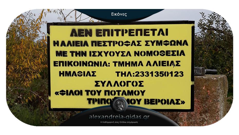 Τοποθέτησαν πινακίδες απαγόρευσης ψαρέματος πέστροφας στον στον Τριπόταμο Ημαθίας