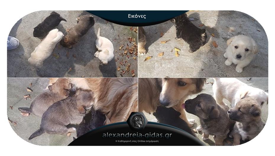 Χαρίζονται αυτά τα πανέμορφα σκυλάκια στο Καμποχώρι