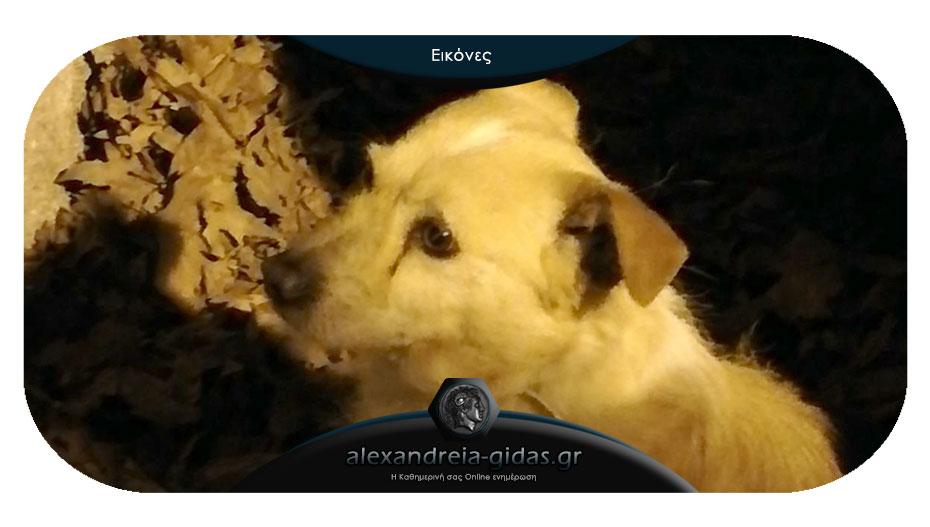 Αναγνώστρια: Βρέθηκε σκυλάκι στην Αλεξάνδρεια