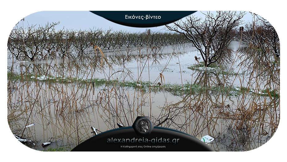Προβλήματα στους αγρότες του δήμου Αλεξάνδρειας δημιούργησαν χιόνι και βροχή
