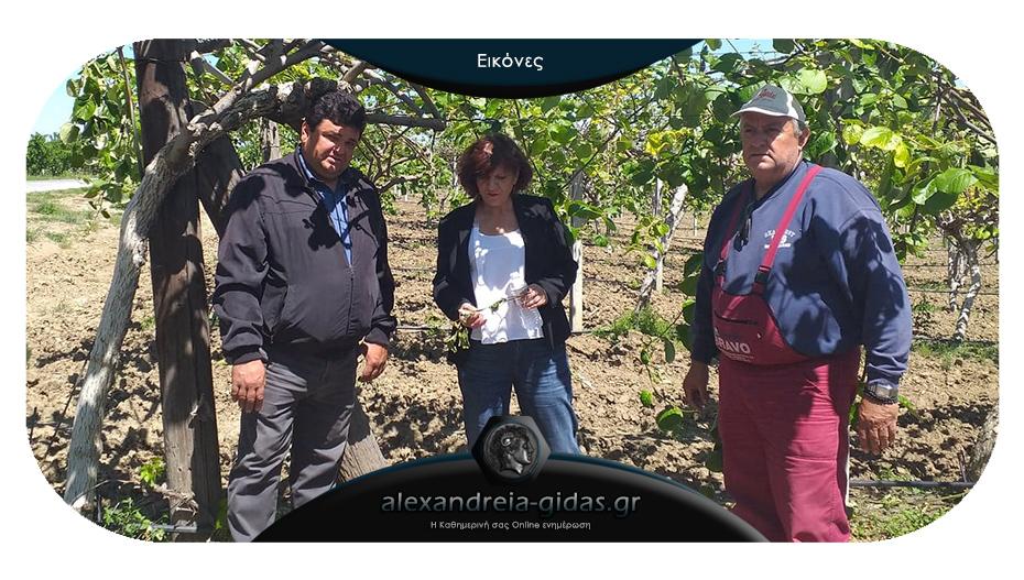 Συναντήσεις με τους αγρότες της Ημαθίας για τις καταστροφές είχε η Φρόσω Καρασαρλίδου