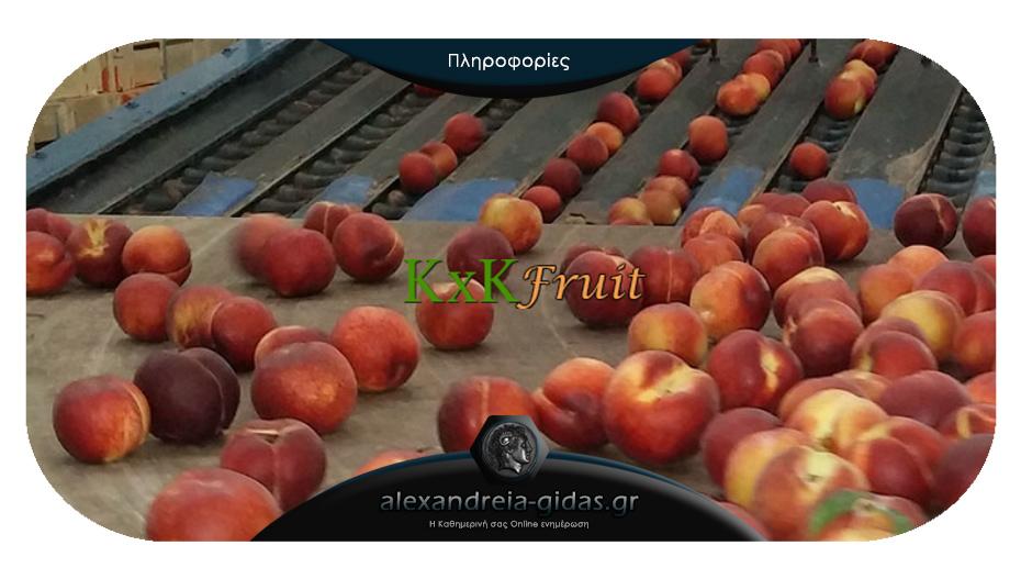 Θέσεις εργασίας στην εταιρία συσκευασίας και εξαγωγής φρούτων «ΚxK FRUIT» Ημαθίας