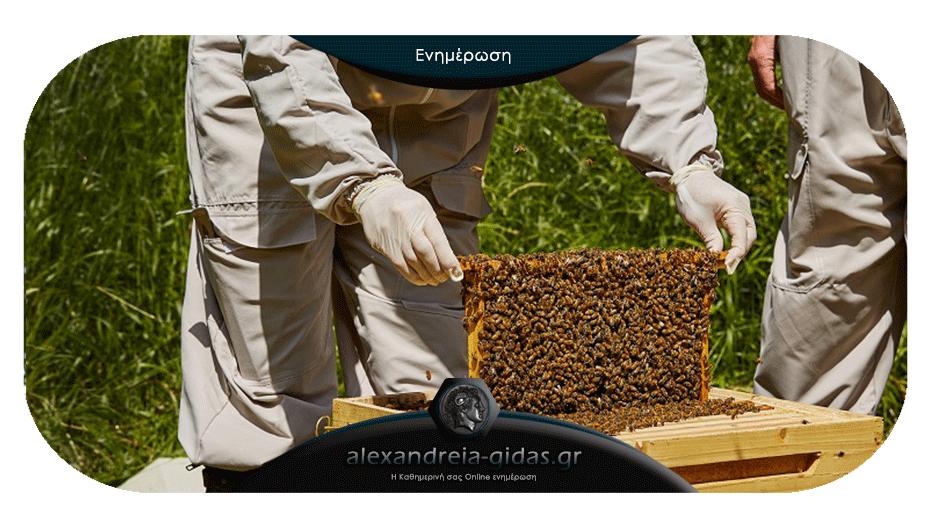 Μελισσοκομικό Πρόγραμμα στην Ημαθία – όλες οι λεπτομέρειες