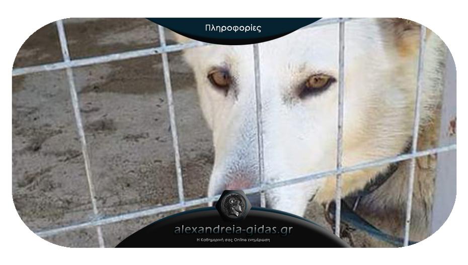Χάθηκε σκύλος από το κυνοκομείο της Αλεξάνδρειας