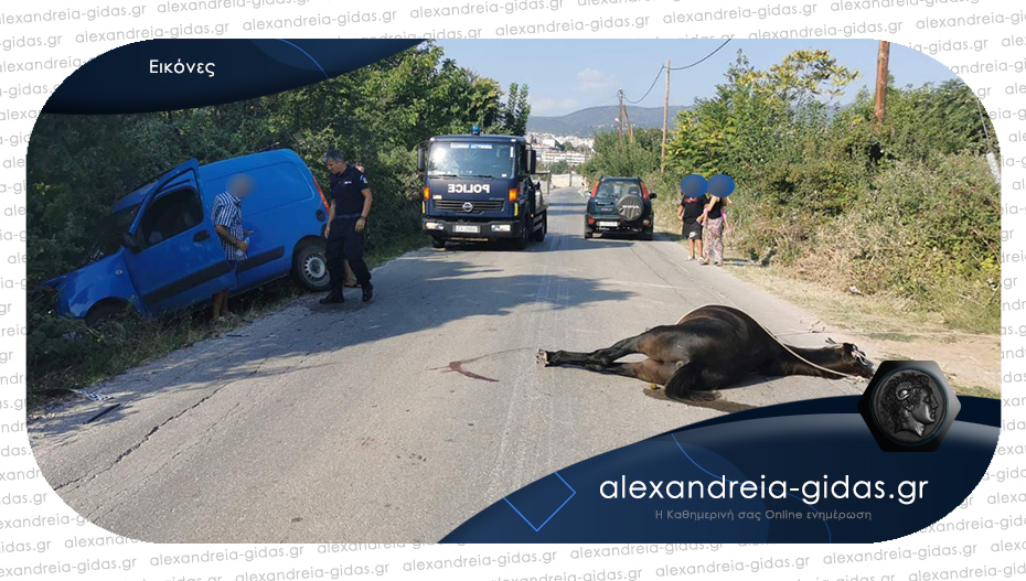 Τροχαίο ατύχημα: Αυτοκίνητο συγκρούστηκε με άλογο στη Βέροια