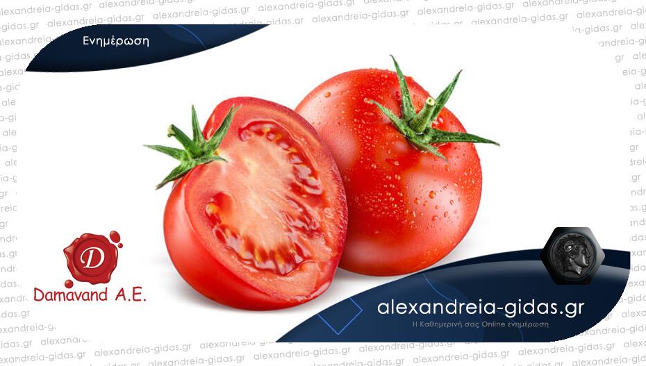 ΑΝΘΥΠΑΤΟΠΟΥΛΟΣ Ο.Ε. στην Αλεξάνδρεια: Πρόσκληση για καλλιέργεια βιομηχανικής ντομάτας στην Ημαθία
