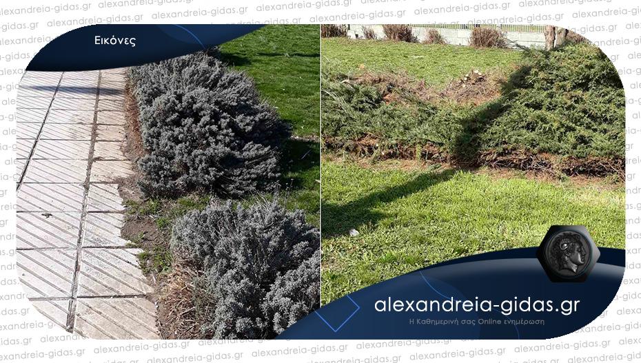 Αναγνώστης: Άλλαξε εικόνα το πάρκο απέναντι από το Κέντρο Υγείας Αλεξάνδρειας!
