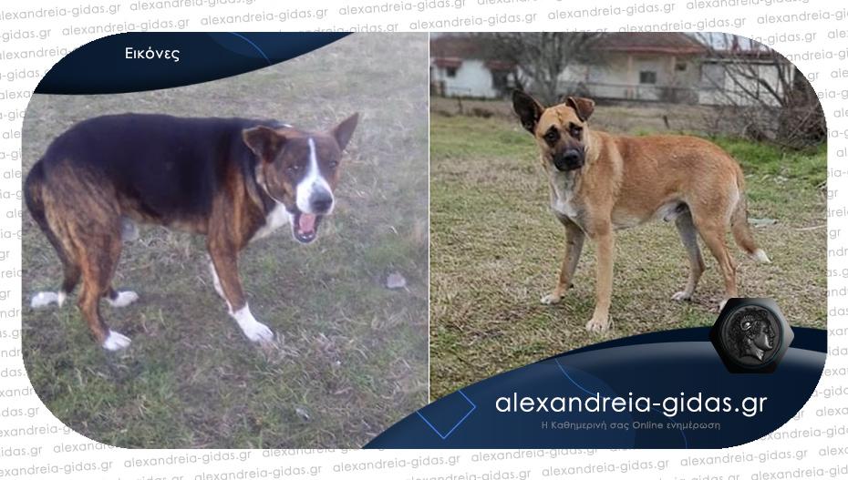Χάθηκαν δύο σκύλοι με αναπηρία από το Παλαιοχώρι – βοηθήστε!