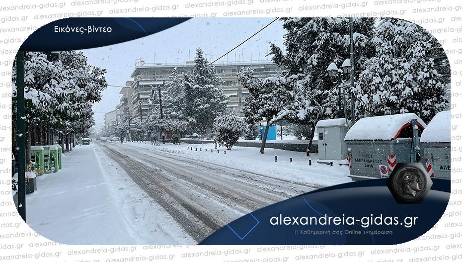 Πρωινή βόλτα στην λευκή Αλεξάνδρεια!