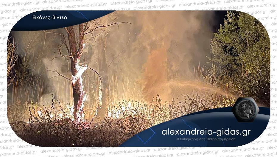 Στις φλόγες μεγάλη έκταση έξω από την Αλεξάνδρεια – μάχη της πυροσβεστικής