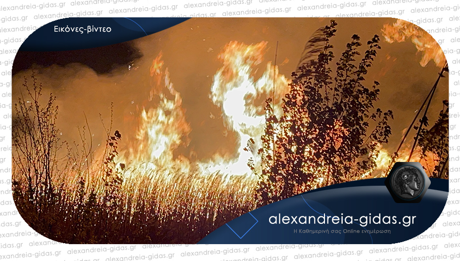 ΤΩΡΑ: Στις φλόγες και πάλι μεγάλη έκταση στον δήμο Αλεξάνδρειας