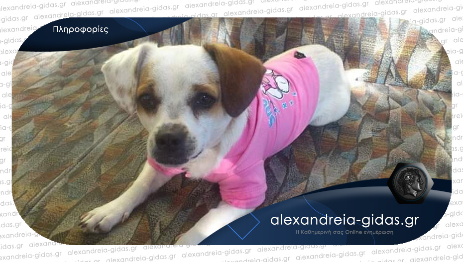 Χάθηκε σκυλάκι στο Λιανοβέργι, βοηθήστε
