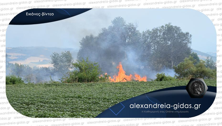 Μεγάλη φωτιά σε αγροτική έκταση του δήμου Αλεξάνδρειας