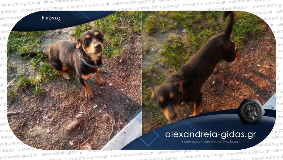 Φιλική σκυλίτσα κυκλοφορεί κοντά στο αεροδρόμιο του Παλαιοχωρίου