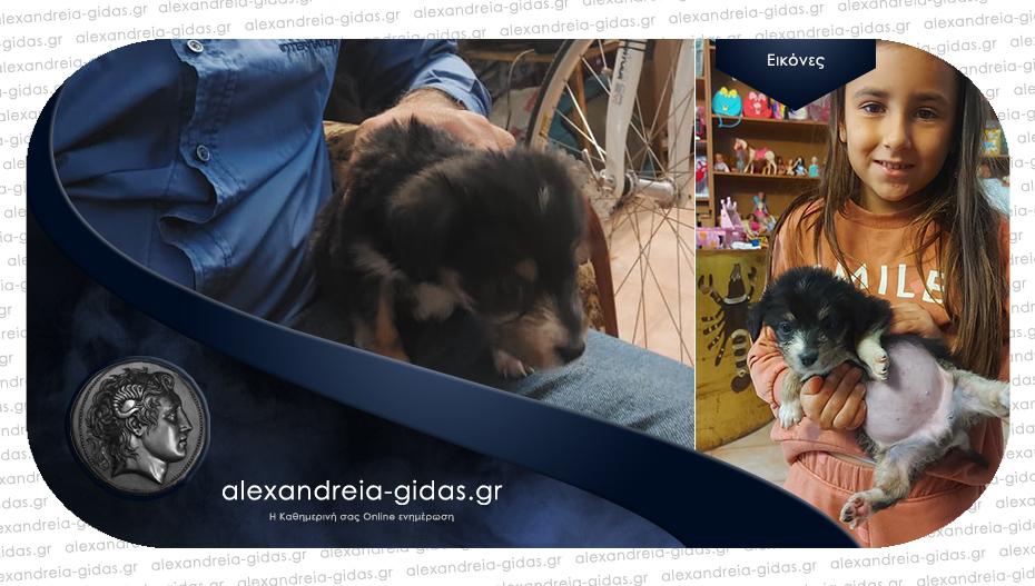 Χαρίζονται δύο πανέμορφα σκυλάκια στην Αλεξάνδρεια